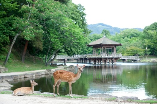 Japan-Unzen-Amakusa-national-park-credit