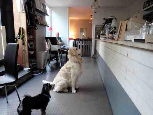 Sweden-stockholm-dogs-paradise (7)
