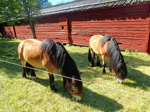 Sweden-#visitumea-vasterbottenns-museum (29)