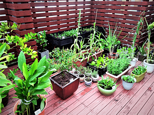 image of rooftop vegetable garden