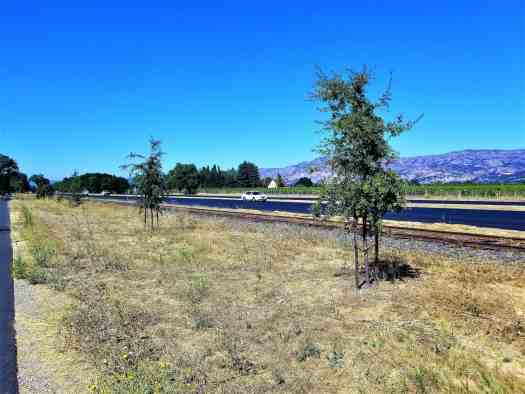 image-of-napa-valley-vine-trail