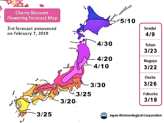 map of cherry blossom front, with best viewing dates in key cities