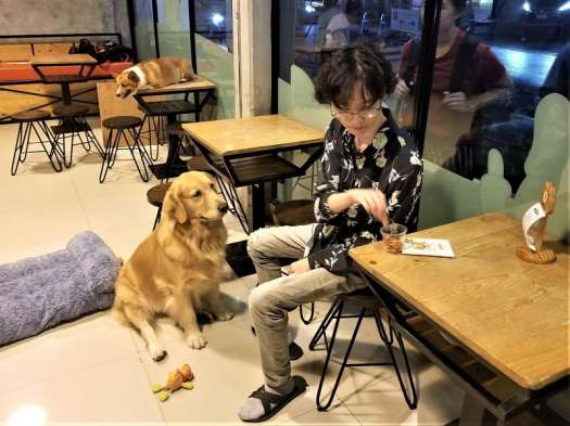dog-waiting-for-a-treat-at-bangkok-dog-cafe