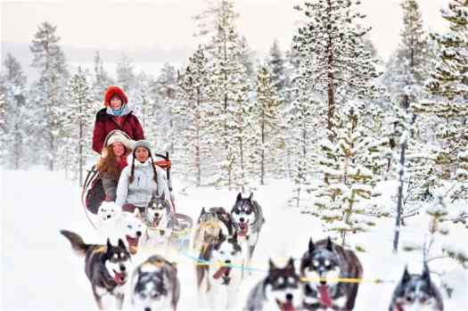 dog-sledding-tour-in-swedish-lapland