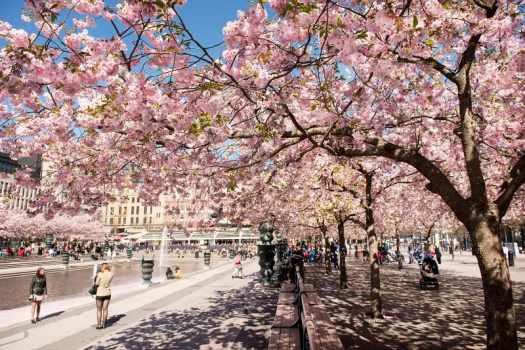 kungsträdgården-park-stockholm-swedem