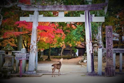 deer-at-temple-gate-in-nara-japan
