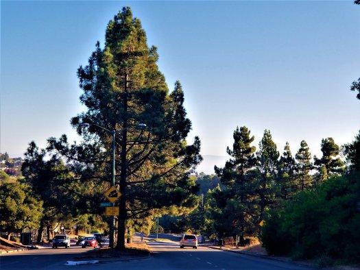 oakland-hills-trees