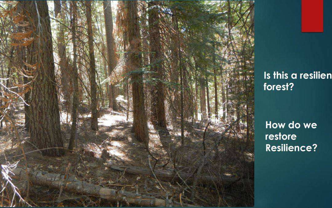 Presentation: Calaveras Big Trees State Park Vegetation Management Plan