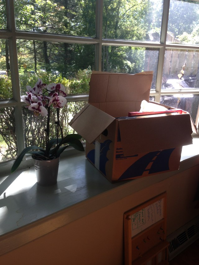 Moving boxes on sunny windowsill next to plant.