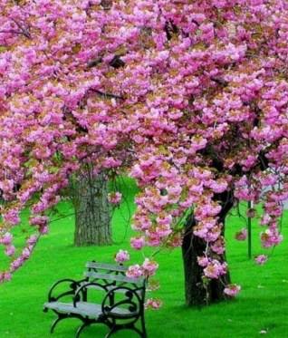 Pink Blossom Tree – marketplace.secondlife.com
