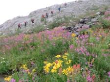 Phee Hudson: flowers in the upper Albert Creek, Monashees