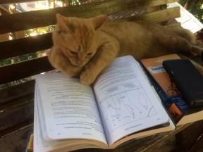 Craig Alfredson: Cat Catching Up On Beta Thailand