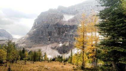 Maija Finvers - Larches in the Fall