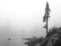 Jes Scott - Paradise Meadows in the mist