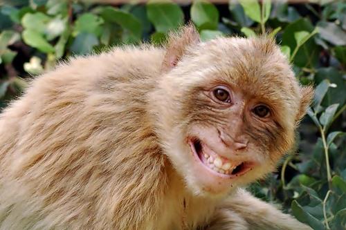 25 happiest animals in