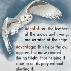 Snowy Owl Adaptations Diagram Iphone 4 Charger Wire Arctic Acds Students Buzzle Adaptation Read Aloud The Audio Recording Is Adapted From Information Gathered On This Website