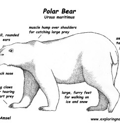 arctic acds students polar bear mouth diagram [ 1650 x 1275 Pixel ]