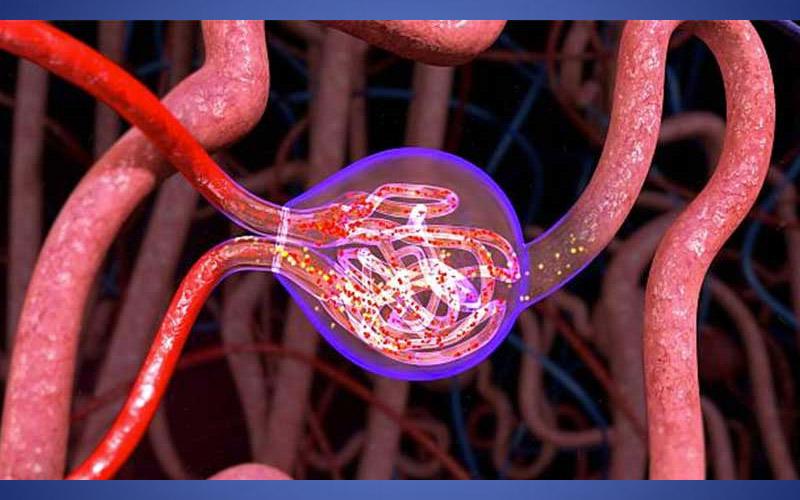 Glomerulopatias