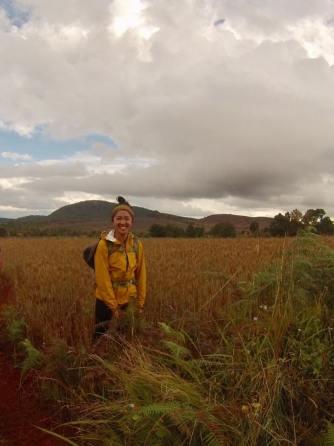 myanmar rice field