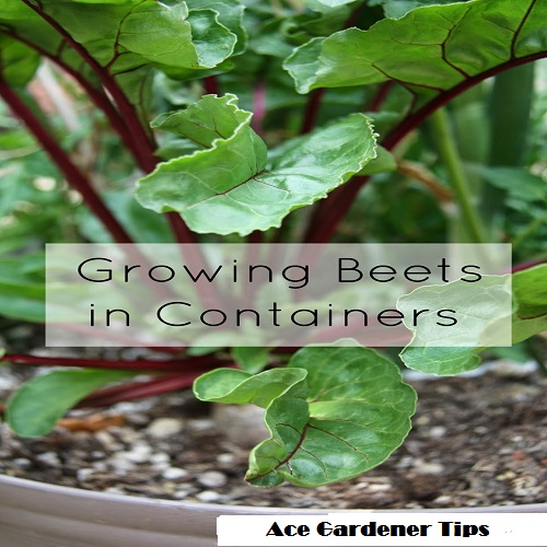 Image Result For How To Grow Vegetables At Home In Pots