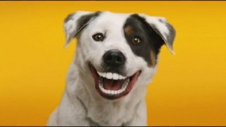 Smiling Dogs Gifs 30 Animated Pics Of Cute Dog Smiles