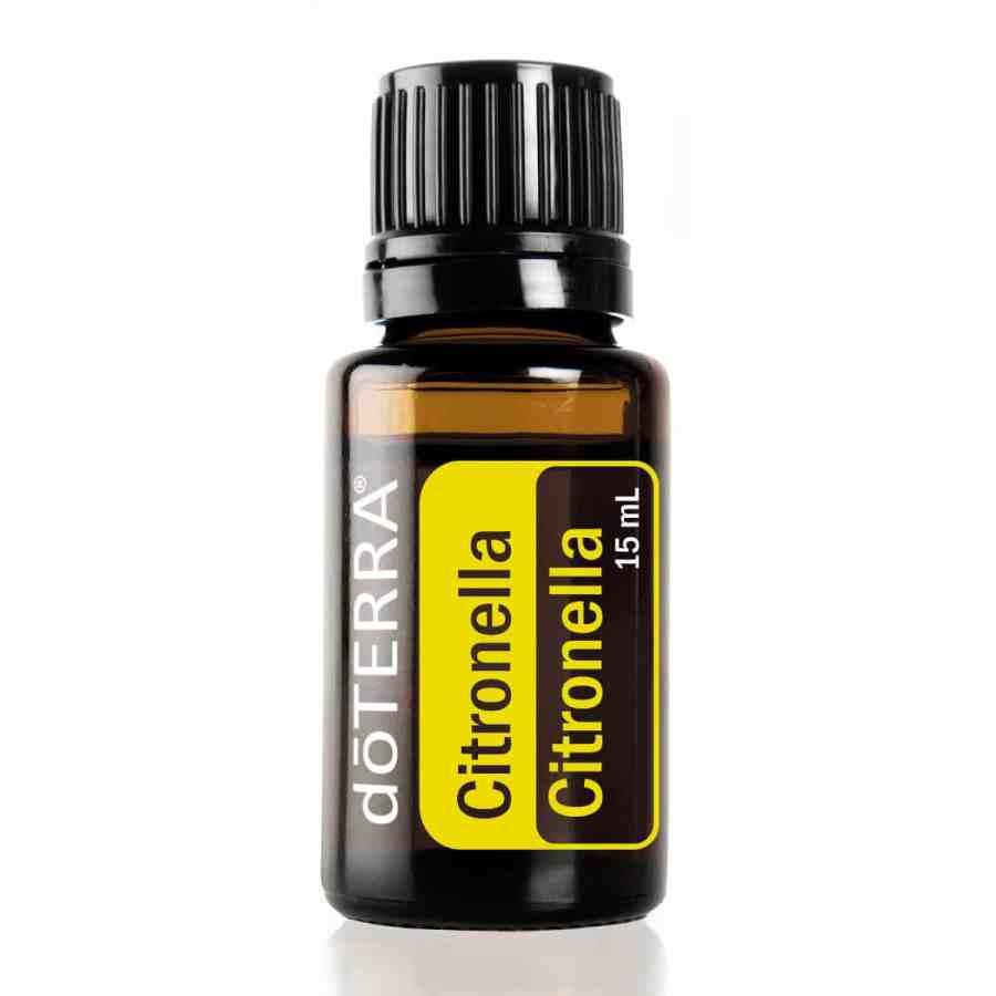 Citronella – Cymbopogon winterianus