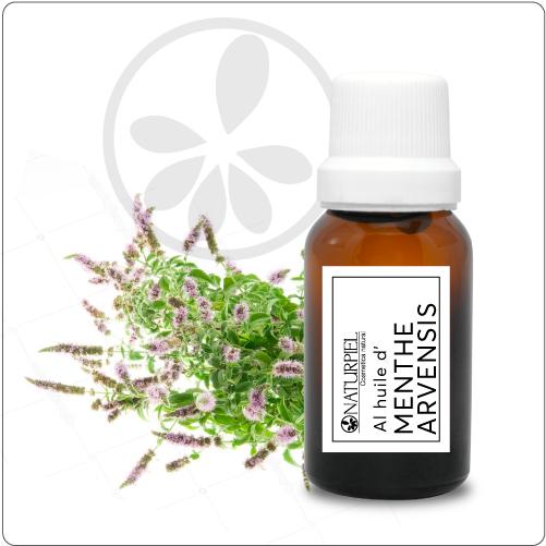Aceite esencial de Menta Arvensis – orgánico 100% puro