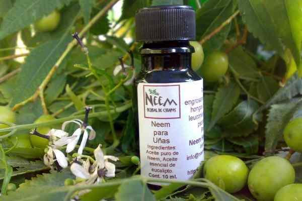 aceite de neem para las uñas
