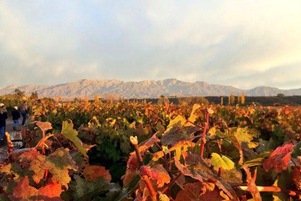 ¿Por qué escribir un blog de vinos?