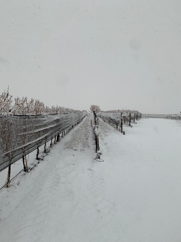 Nieve en los viñedos - Finca Las Cuchillas (Zuccardi Wines) - San Pablo - Tupungato - Foto Sebastián Zuccardi