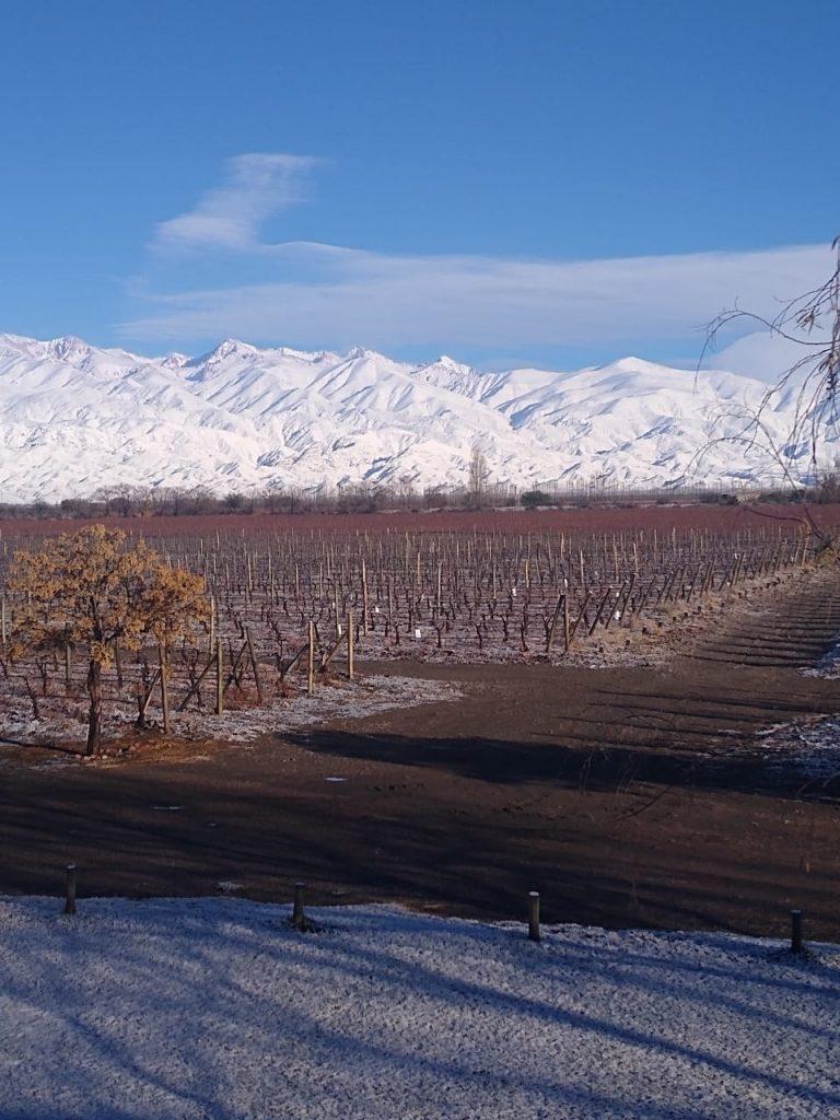 Nieve en los viñedos - Finca Sophenia - Gualtallary (Foto: Julia Halupczok)