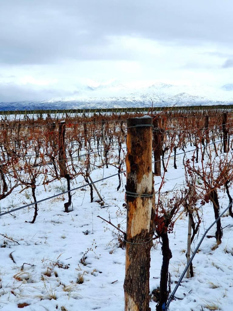 Nieve en los viñedos - Gen del Alma - Gualtallary (Foto: Matías Prieto)