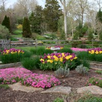 Tips for Planting Tulips in Tennessee - Acer Landscape ...