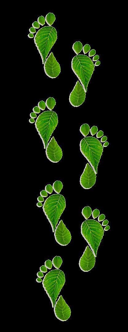 oferta usług ogrodniczych