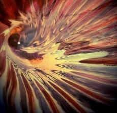 Tigerfish Eye Square 2 wtrmk