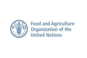 United Nations FAO Internship