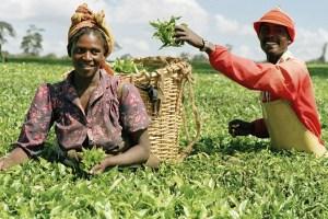 Anchor Borrowers' Programme: CBN disbursed N791 Billion to over 3m farmers