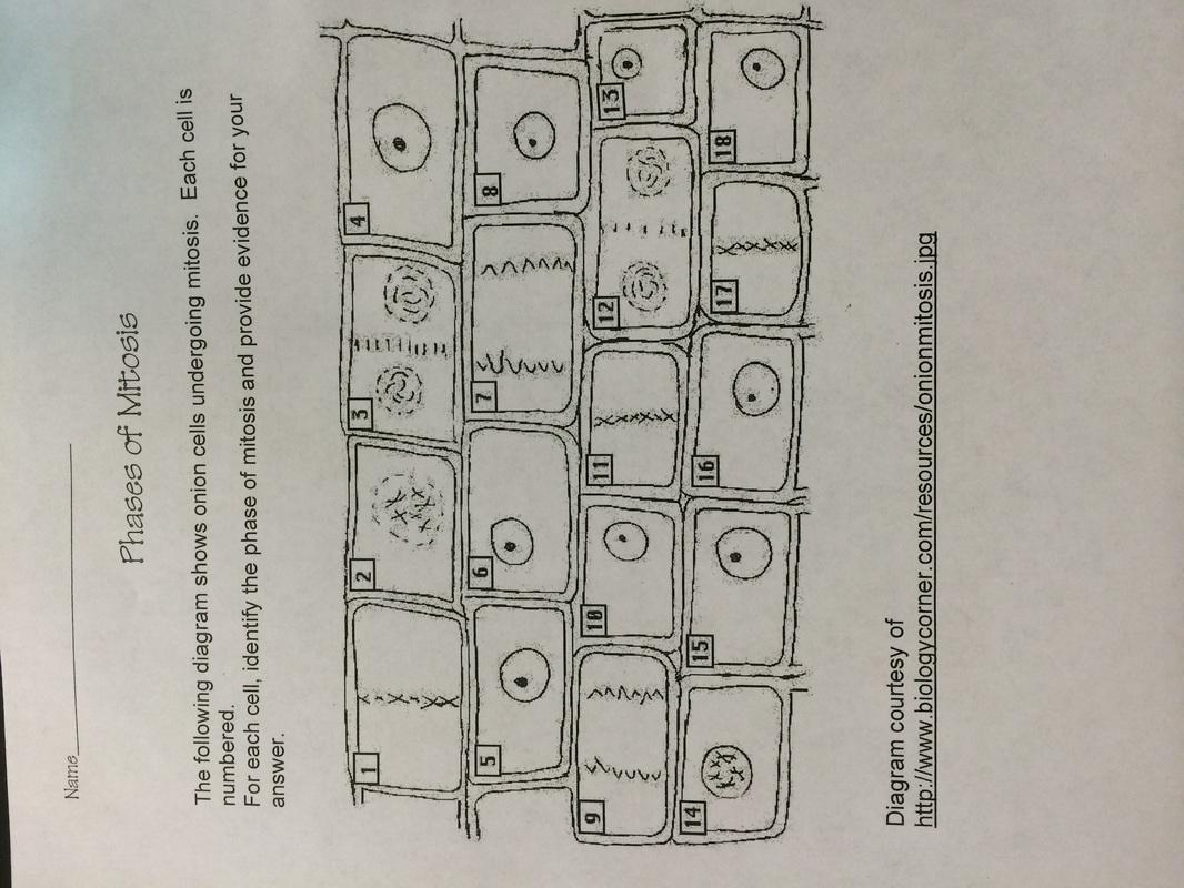 Mr Ferrel S Science Class