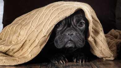 Photo of 8 dicas para reduzir o estresse dos animais durante as datas festivas