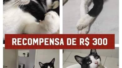 Photo of Gato está desaparecido em Campo Grande!! Família oferece recompensa em dinheiro