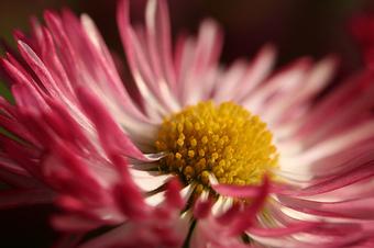 Flower_from_wuschl_on_flickr