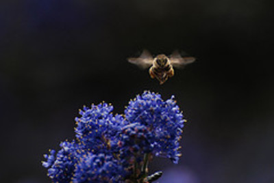 Mr_pollen_pants_2