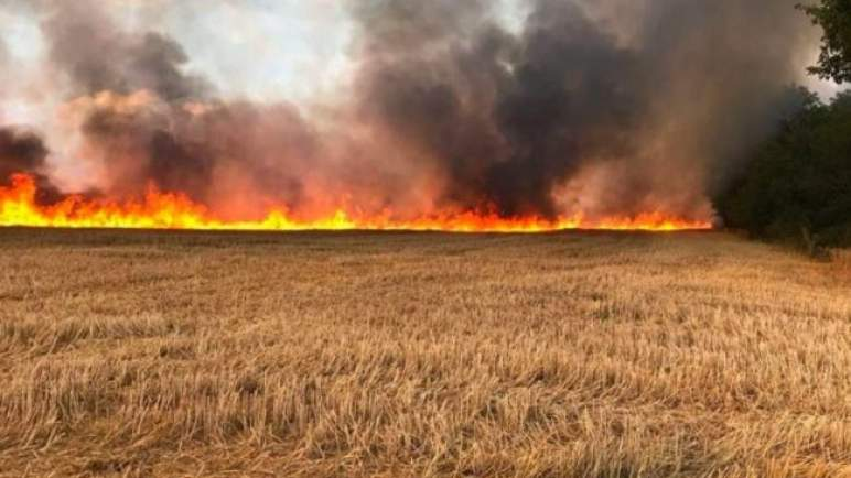 حصيلة ثقيلة… الحرائق تأتي على 120 هكتارا من محاصيل الحبوب ببرشيد