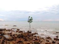 One Tree, All Alone At Sea