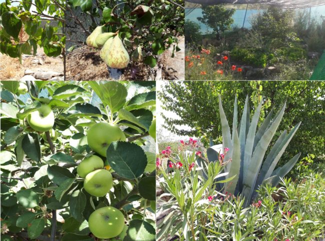 Finca fruits végétation post-Covid acheter immobilier en Espagne