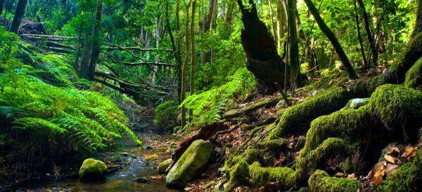Parque Nacional de Garajonay Gomera Canaries -acheter-immobilier-en-Espagne