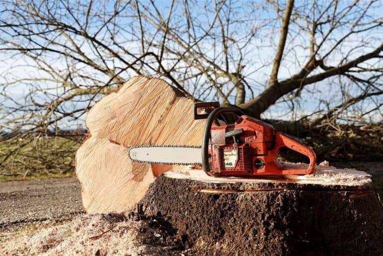 Kingdom Timber Logging & Forestry LLC - Arbre