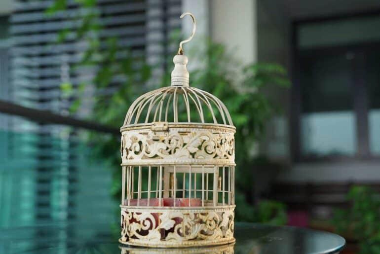 Des oiseaux - Perroquets