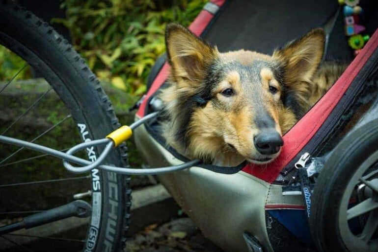 Chien - Bicyclette