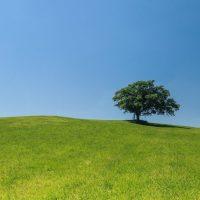 hill meadow tree green